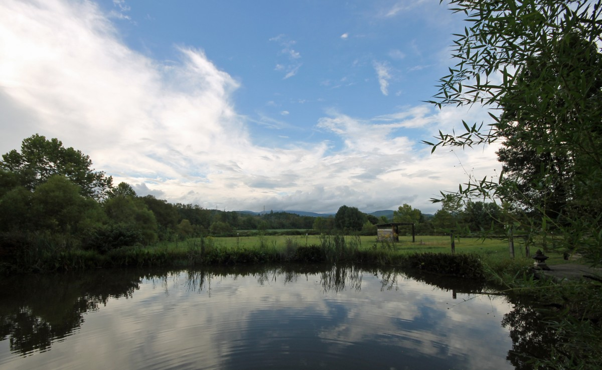 The pond, with the pasture in the background,